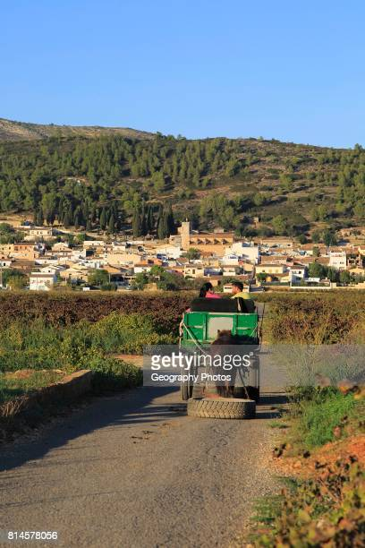Gypsy horse and cart on road through grapevines near village of Lliber Marina Alta Alicante province Spain