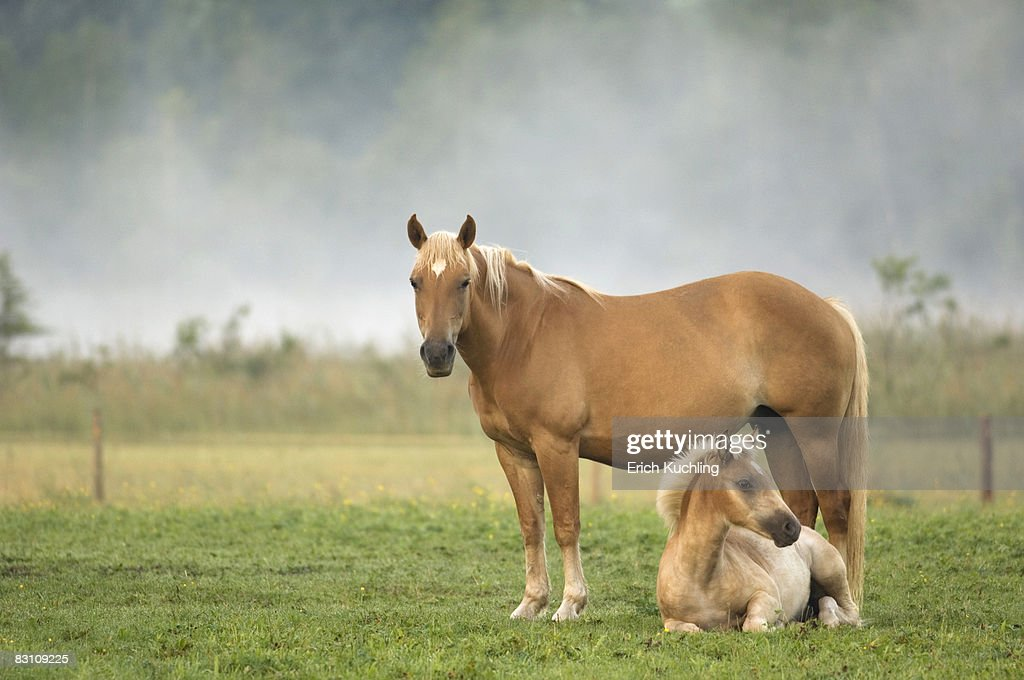 Horse and foal in pasture