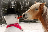 I took this photo of our haflinger horse at the moment he was stealing Frosty the Snowman's nose.  I took this photo in winter 2009.