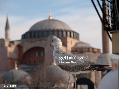 Hagia Sophia and Seagull, Istanbul : Stock Photo