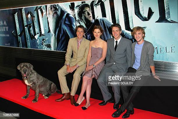 Hagrid's dog Crockdur Oliver Phelps Bonnie Wright James Phelps and Tom Felton in Paris France on June 09 2009