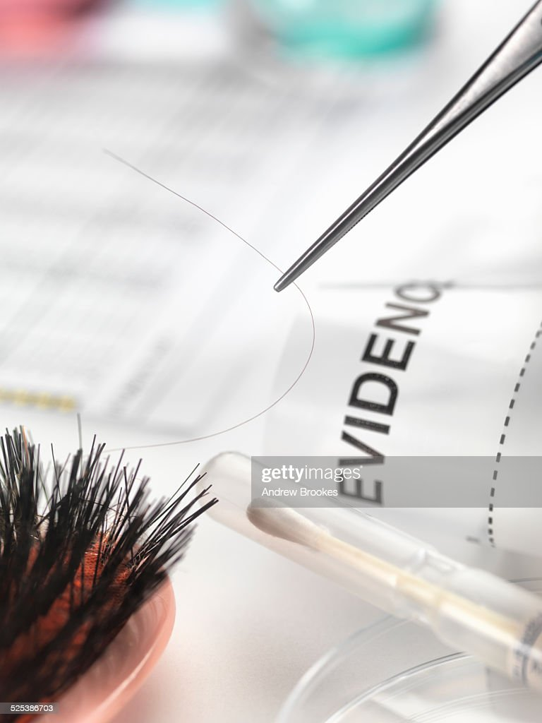 Hair sample collected from crime scene for genetic testing in laboratory