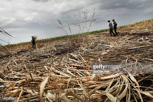 Haitian sugar cane workers are viewed in a field on a batey on February 29 2012 in San Pedro Dominican Republic A batey is the name given to...