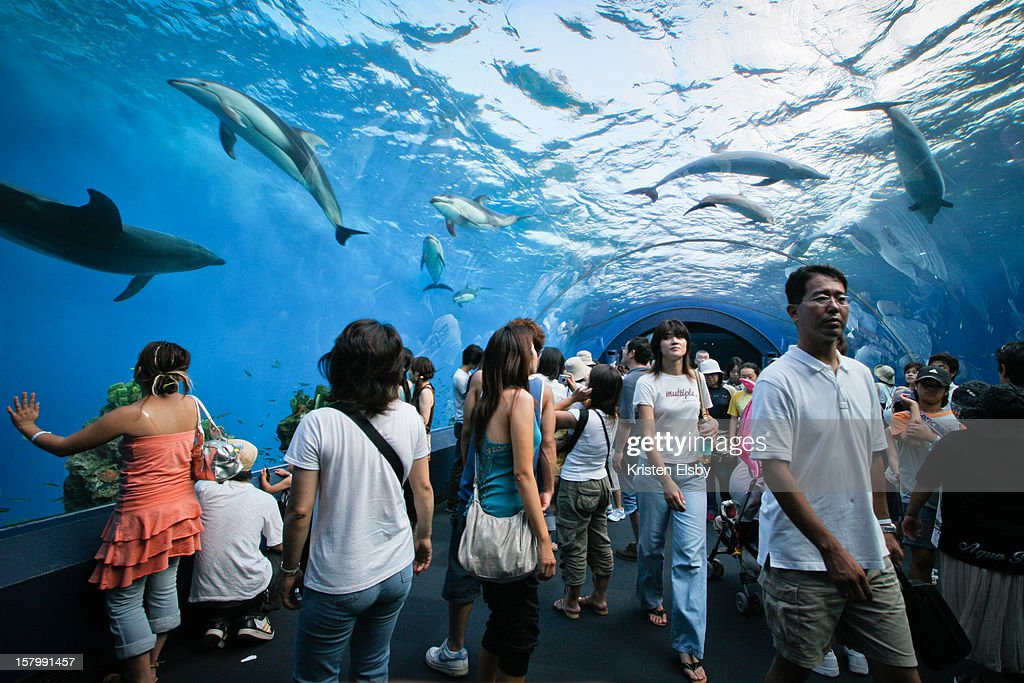 Hakkeijima Sea Paradise has a giant dolphin tank with an tunnel through the middle that visitors can walk through, watching the majestic white-bellied marine mammals swim overhead.
