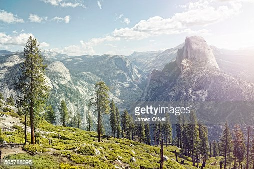 half dome in yosemite with foreground trees