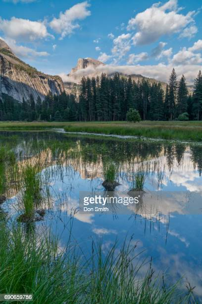 Half Dome Reflection in Cook'u2019s Meaedow