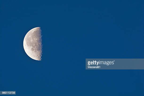 Half moon with lunar crater in the morning