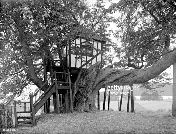A halftimbered tree house in an old tree at Pitchford Hall 1959 It is in keeping with Pitchford Hall which is an example of a 16thcentury...