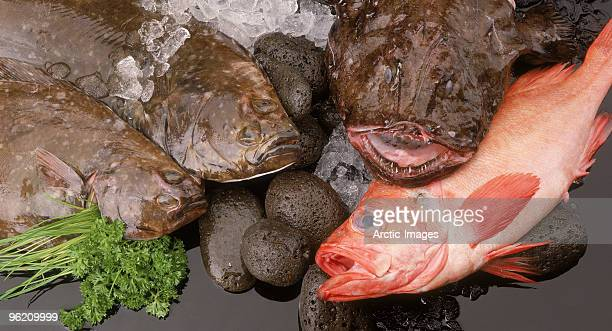 Halibut, monkfish, redfish, freshly caught