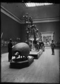 Hall 35 Paleontology Displayed on pedestals 19 23 are the Glyptodon armadillo carapace Megatherium Ground Sloth skeleton and Colossochelys model of...