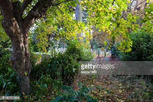 Halstead Cemetery. : Stock Photo
