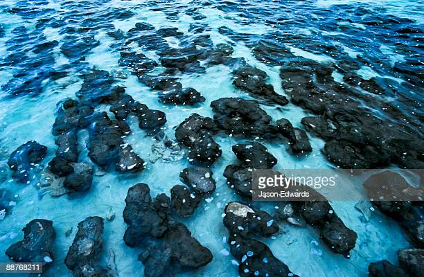 Ancient Stromatolites once produced all of the oxygen on planet Earth.