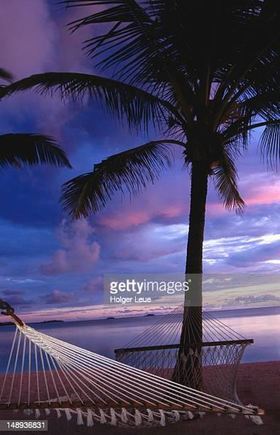 Hammock and coconut tree at dusk.