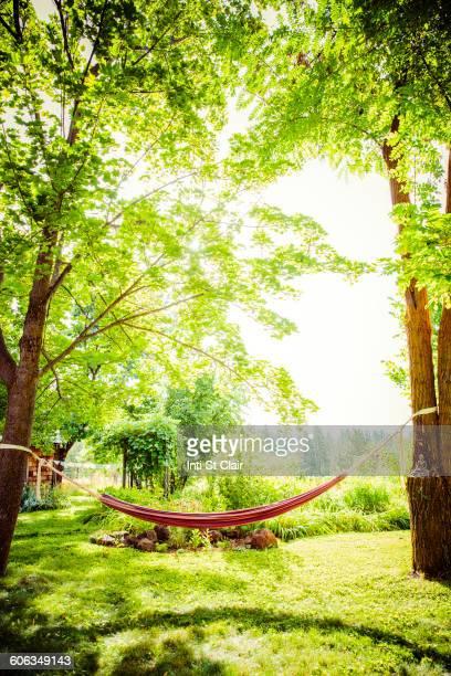 Hammock between trees in backyard