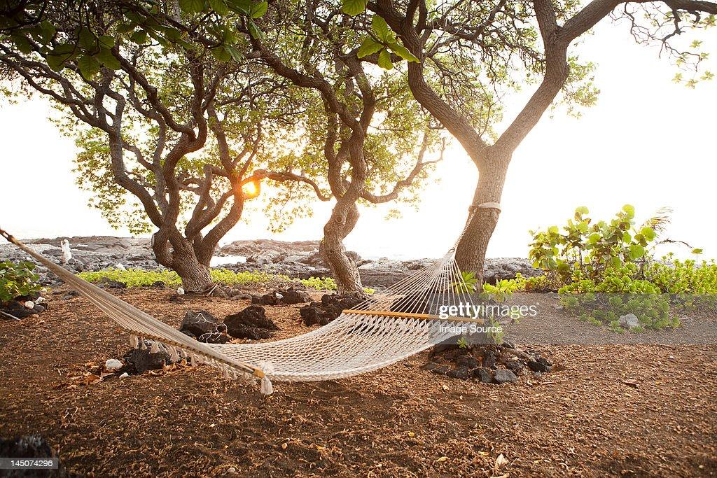 Hammock by the ocean on the Big Island of Hawaii : Stock Photo