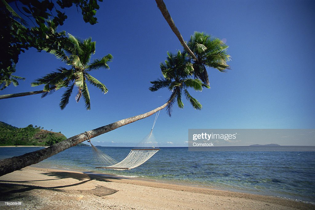 Hammock hanging from palm trees in the South Pacific