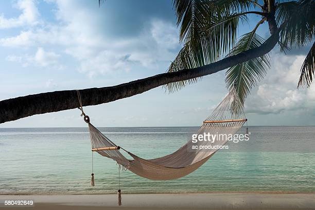 Hammock hanging on palm tree at beach