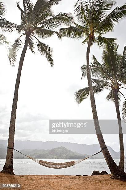 Hammock strung between palm trees