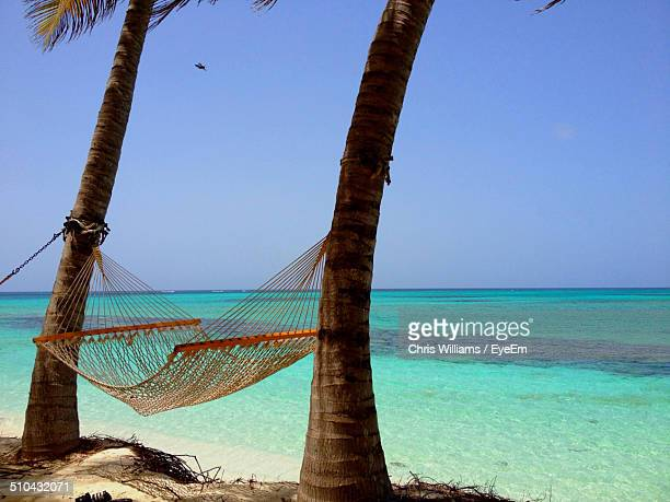Hammock tied at tree trunks against calm scenic sea
