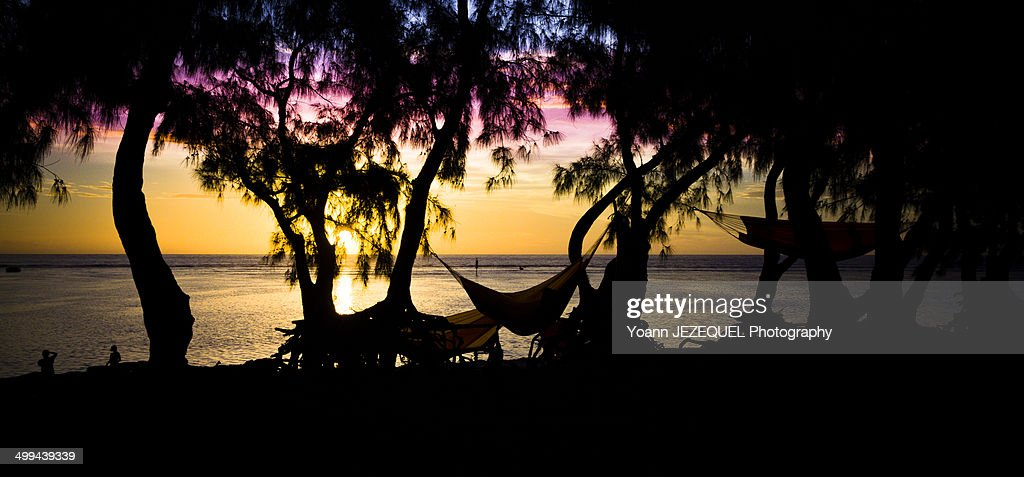Hammocks on the beach : Photo