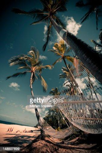Hammocks tied to palm trees overlooking Sunset beach.