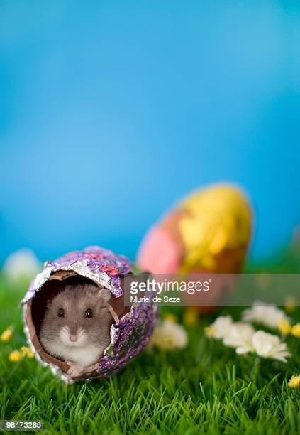 Hamster in Easter egg