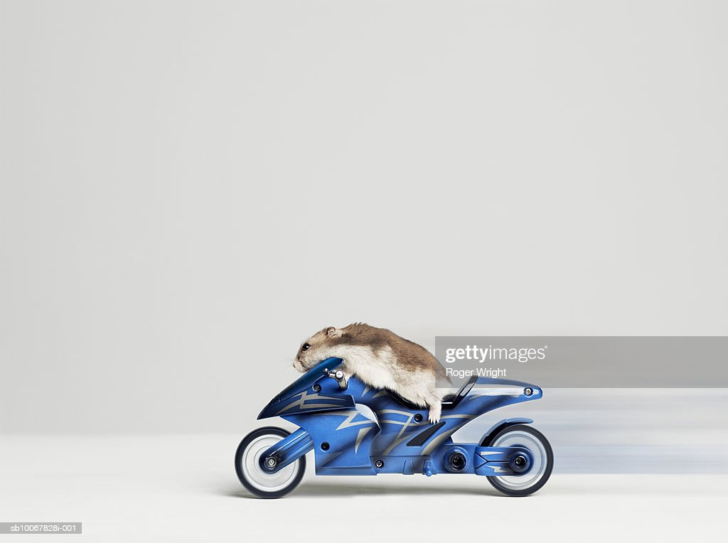 Hamster sitting on toy motorcycle, side view, studio shot