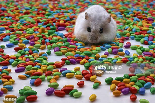 Hamster with colorful candies