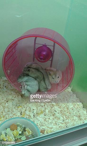 Hamsters In Cage At Pet Shop