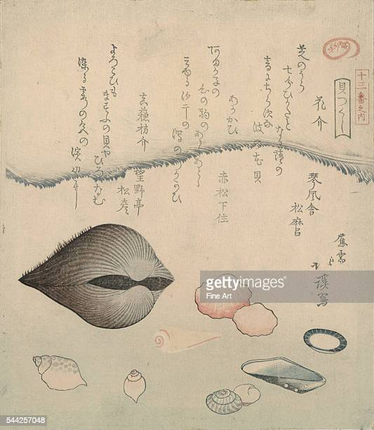 Hana gai aragai masuo gai From the series Kai zukushi A complement of shellfish Between 1800 and 1830 Woodcut color 217 x 188 cm
