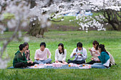 Hanami Under Full-bloomed Cherry Blossoms, Differential Focus,