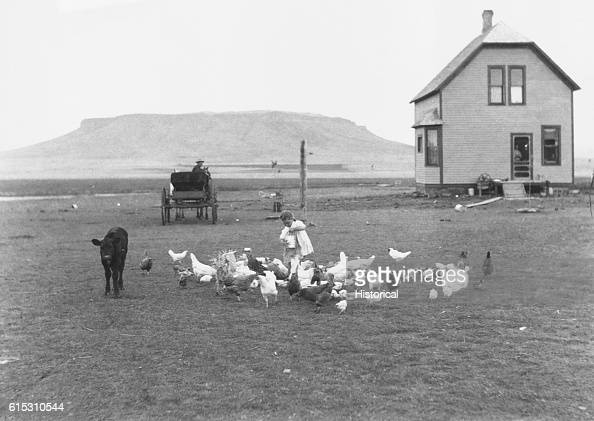 Hancock homestead Settler from Benson Minnesota A little girl feeds chickens against background of house buckboard wagon and ridge of plateau Sun...