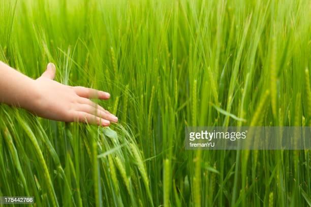 La main dans le champ de blé