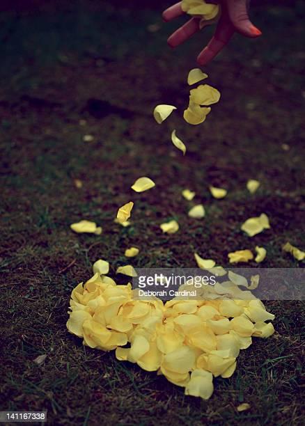 Hand dropping rose petals