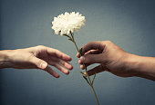 Hand giving hand a flower. Love concept.