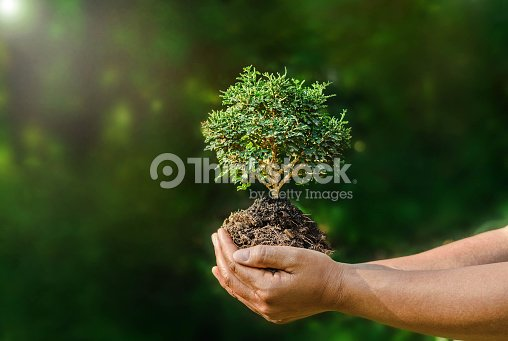 hand hold small plant on green background and sunshine : Foto de stock