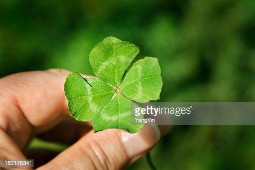 Hand Holding a Four Leaf Clover Green Good Luck Charm