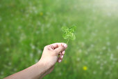 Hand holding a four leaf clover in a green field