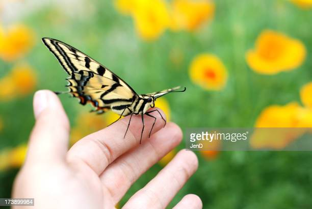 A hand holding a swallowtail butterfly out in the garden