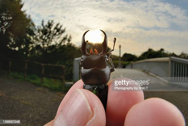 Hand holding beetle against sun