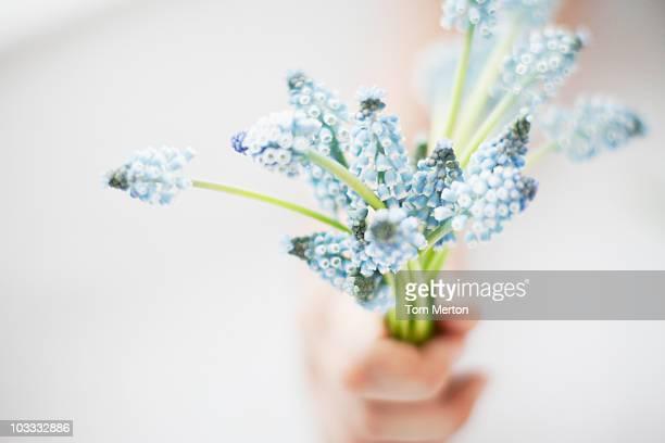 Main tenant bouquet de raisin hyacinths