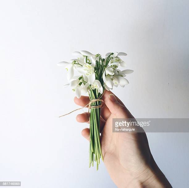 hand holding bunch of snowdrop flowers