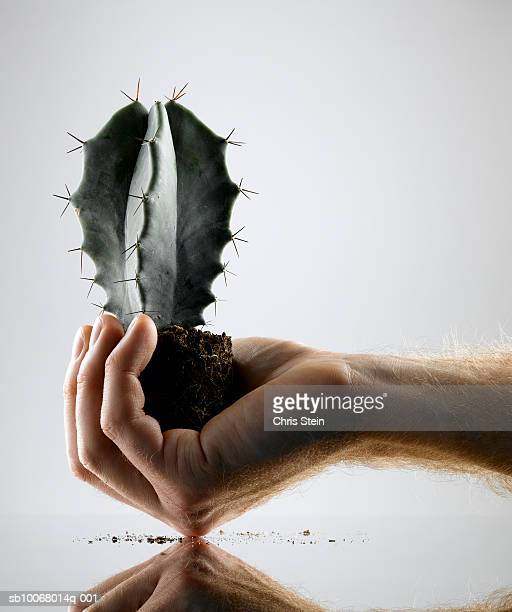 Hand holding cactus