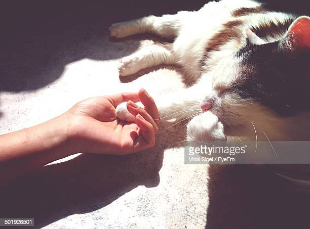 Hand holding cat limb at home