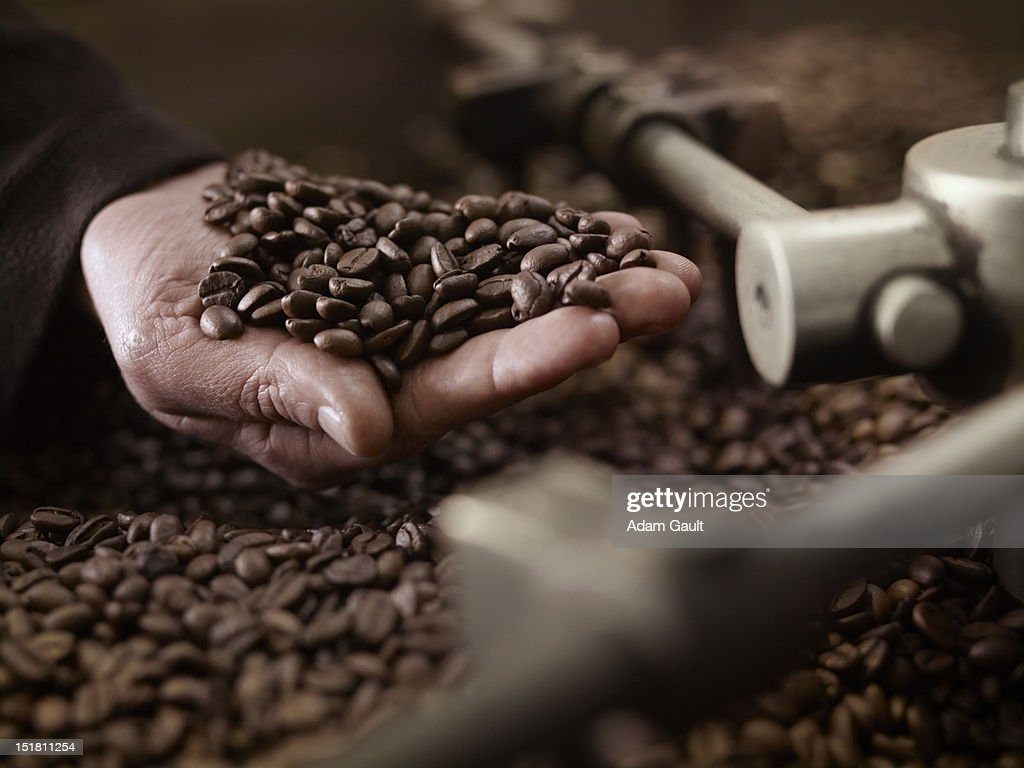 Hand holding coffee beans over roasting machine : Stock Photo