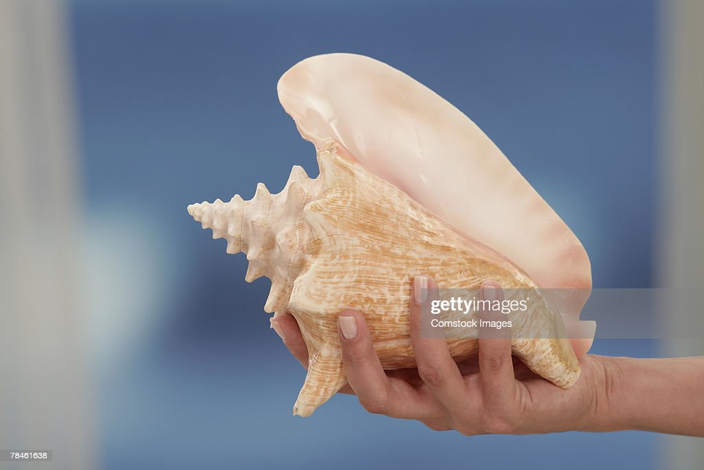 Hand holding conch shell