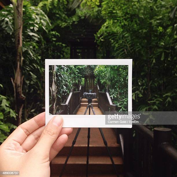 Hand holding instant photo picture of camera on tripod amid lush foliage