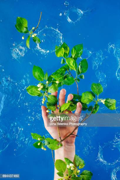 Hand holding leaves and spring flowers in water splash