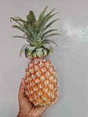 Pineapple fruit in Asian Thai woman hand