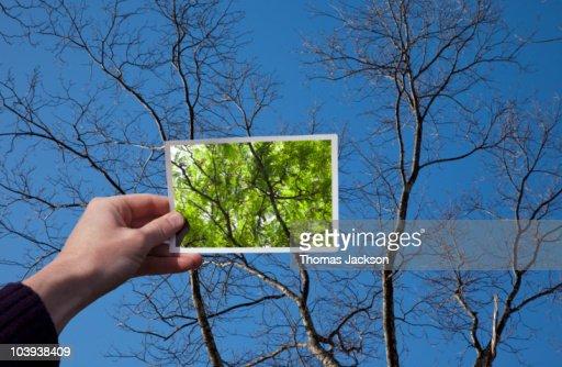 Hand holding snapshot of trees : Stock Photo
